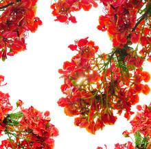 Red Flower Peacock