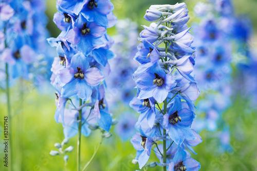Fotografering Flower Delphinium