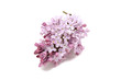 Beautiful purple lilac flowers on a white background