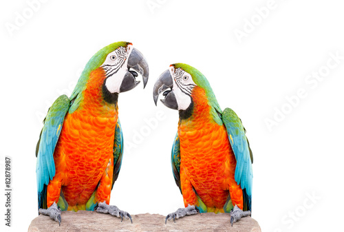 Papiers peints Perroquets Two parrot standing on dry tree isolated over white background