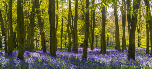 Sunlight casts shadows across bluebells in a wood - 82879966