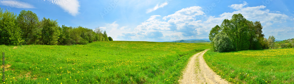 Fototapety, obrazy: Country road among green meadows with dandelions