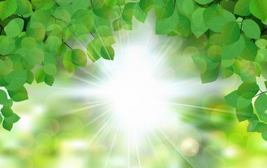 FototapetaSummer fresh leaf green leaves with sun rays