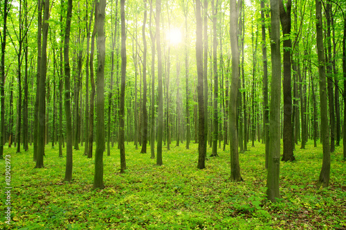 Foto op Canvas Bos sunlight forest