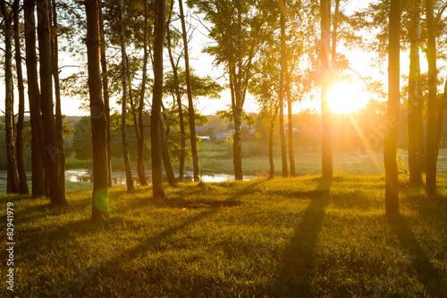 Photo sur Toile Cimetiere forest