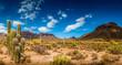 canvas print picture - Arizona Desert Ladscape