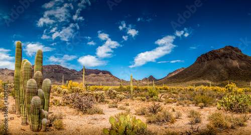 Deurstickers Cactus Arizona Desert Ladscape