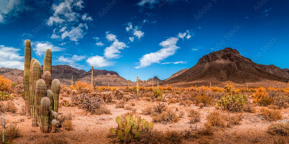 Fototapeta Arizona Desert Ladscape