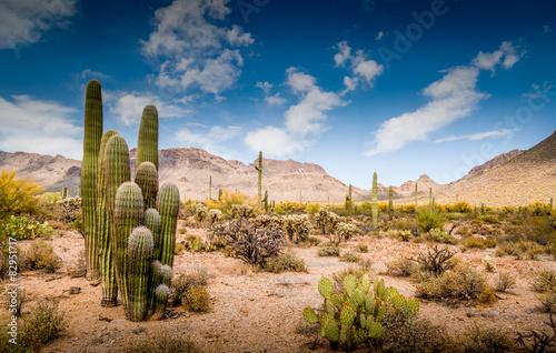 Poster de jardin Desert de sable Arizona Desert Ladscape