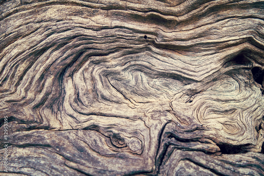Bark Tree wood texture