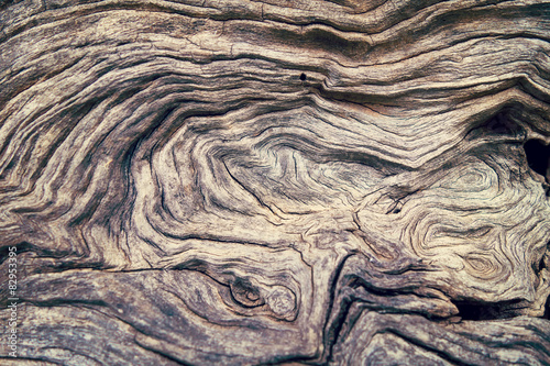 Bark Tree wood texture Canvas Print