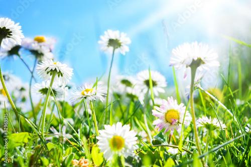 Foto op Plexiglas Madeliefjes Gänseblümchen, blauer Himmel