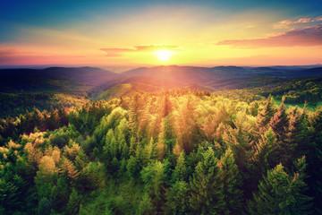 Naklejka Malerischer Sonnenuntergang über dem Wald