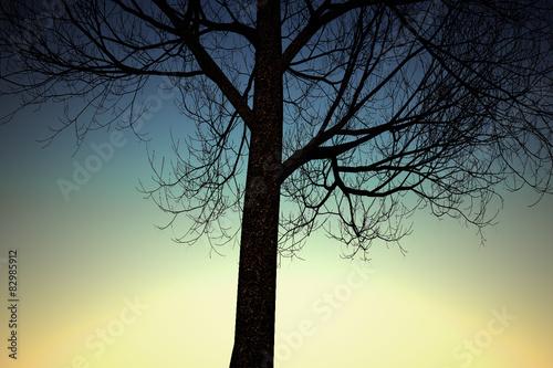 Tree and Twilight