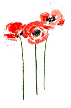 Collection Of Watercolor Poppy...