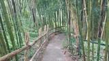 Ścieżka wśród bambusów