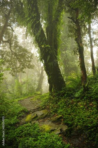Poster  Selva de Nepal