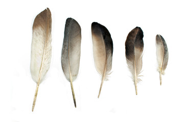 Feathers isolated on white