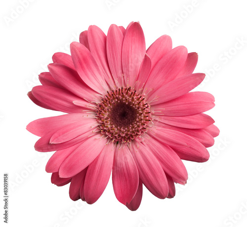 Door stickers Gerbera Pink gerbera