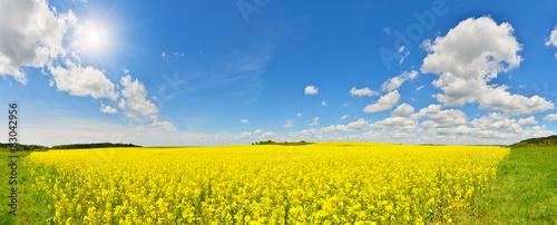Poster Jaune Flower field