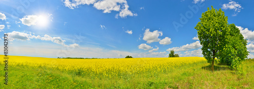 Poster de jardin Orange Spring view of countryside with green tree and a flower field