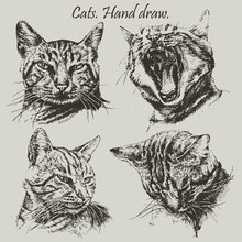 Set With Different Heads Cats