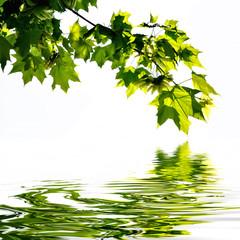 Obraz na Plexi Feuilles de platane sur l'eau