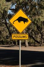 Australian Road Sign Possums C...