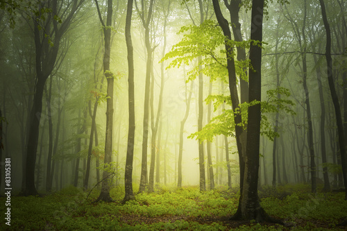 Papiers peints Foret brouillard Magic light into the forest