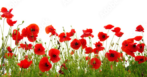 Foto op Canvas Poppy red poppy