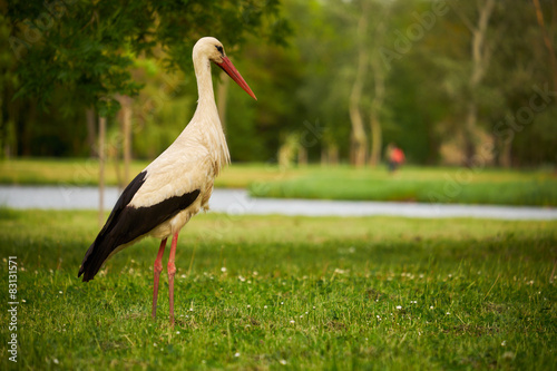 Naklejki Bocian  stork-on-the-meadow