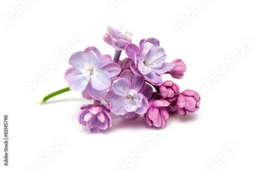 Photo sur Toile Lilac Lilac flowers isolated. White background