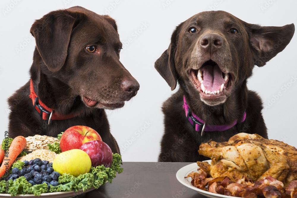 Fototapeta Food diet for pets