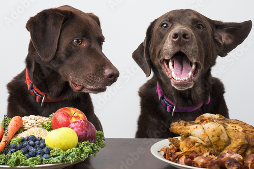 Photo  Food diet for pets