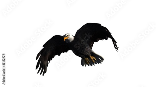 Poster Aigle eagle - isolated on white background