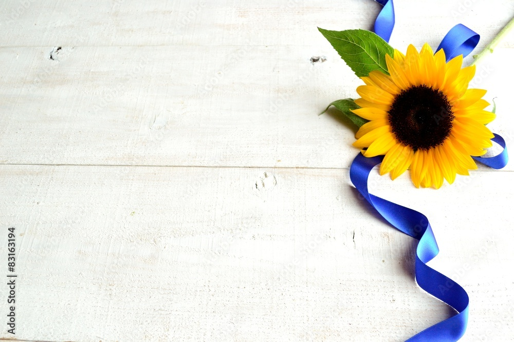 Sunflower with blue ribbon