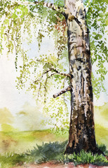 Obraz na Szkle watercolor illustration with birch