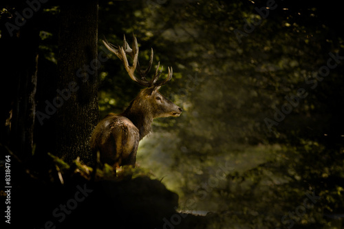 Poster Cerf Ambiance cerf dans une fôret sombre