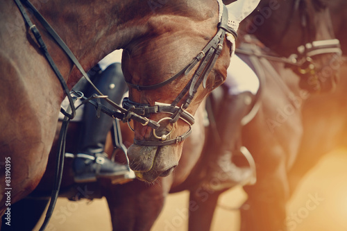Papel de parede Sports brown horses before competitions.