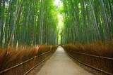 Fototapeta Bamboo - bamboo groove
