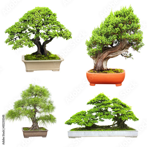 Spoed Foto op Canvas Bonsai Set of bonsai