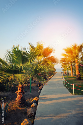 Poster Natuur Path to the sea between the palm trees