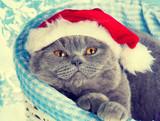 Kot w czapce św. mikołąja