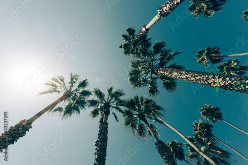 Plakat Palm Trees in California