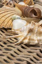 Closeup View Of Seashells In T...