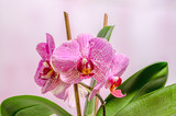 Orchidee i liście