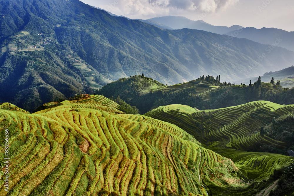 Fototapeta rice terraced fields Wengjia longji Longsheng Hunan China