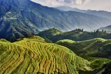 Rice Terraced Fields Wengjia L...