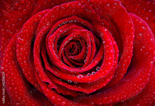 Tematy naklejek na wymiar roza-i-krople