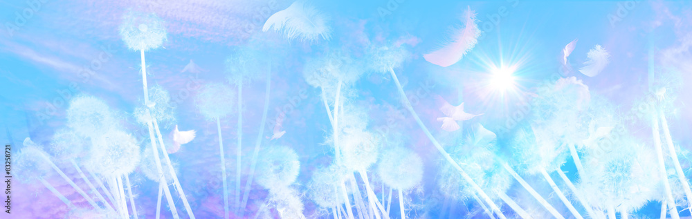 Fototapety, obrazy: White Dandelions Sunrise with Feathers